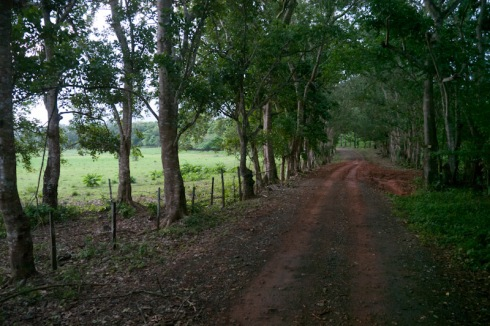 5 p.m., on the way back in the colectivo, red dirt road