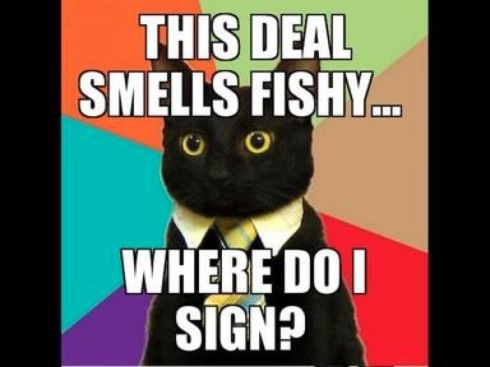 cat meme: deal smells fishy, where do I sign?