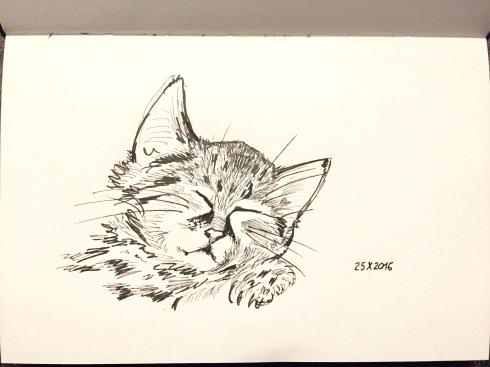 Kitten asleep.