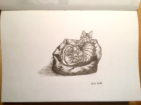black ink drawing of my two cats sharing one basket.