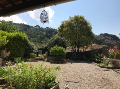 Le jardin vu depuis le porche de la cuisine. Plate-bande de menthe, graviers, l'hortensia à droite, le psittoporum au centre, le troène au fond.