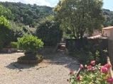 Le jardin vu du portail. Hortensia et rosier au premier plan. Plate-bande de rosiers, troène en fleurs. L'accès aux escaliers. Au centre, le pittosporum et sa bordure en bambou.
