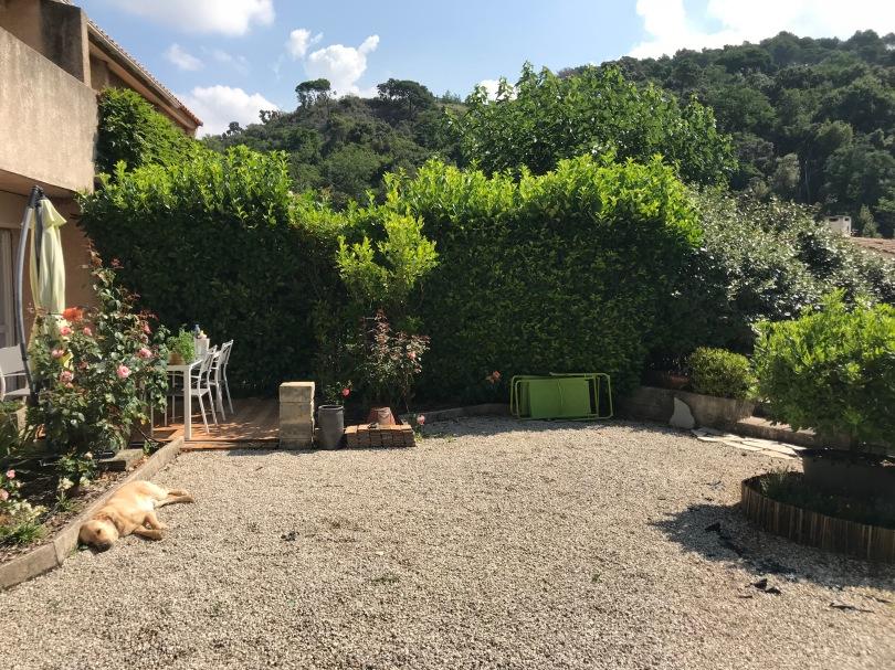 Le jardin et la terrasse vus depuis le portail. Gizmo couché au soleil sur les graviers. La haie de laurier boule pousse. Les rosiers ont repris la floraison après avoir fait de nouvelles branches.